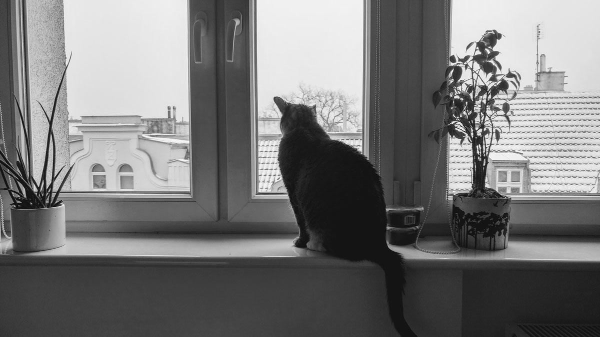 Maniek – kot który zniknął